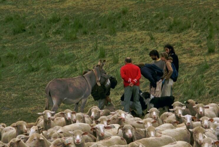 Stage de formation : soins aux brebis.