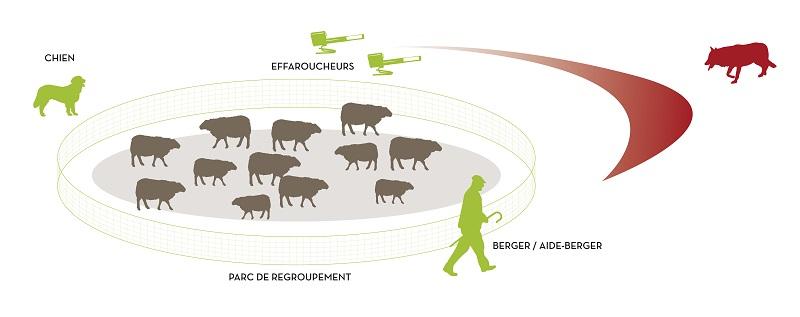 protection-troupeaux- florian graf