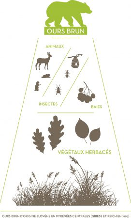 ours alimentation FERUS