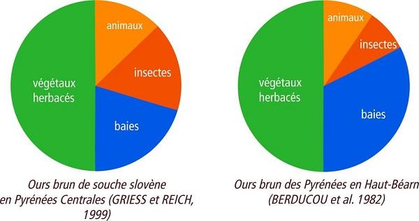 regime-alimentaire-ours-pyrénées-slovénie