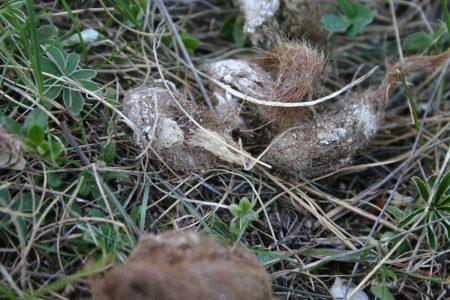 crotte loup-poils-esquilles
