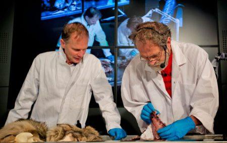 L'autopsie du loup de Luttelgeest