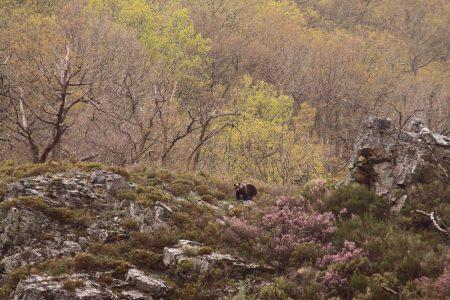 ours-espagne-gazette47-Guder