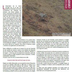 récit-obs-oup-gazette47-FERUS.pdf