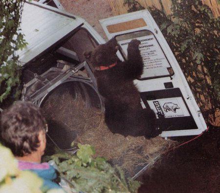 Ziva-ours-pyrénées