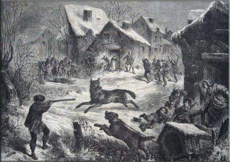 chasse loup
