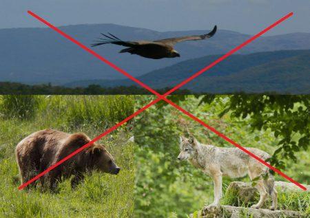vautour-ours-loup