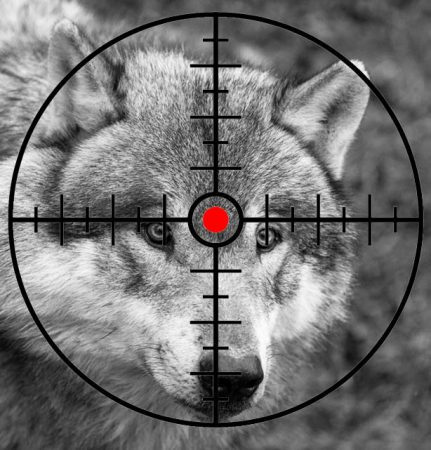 loup cible MB noir et blanc