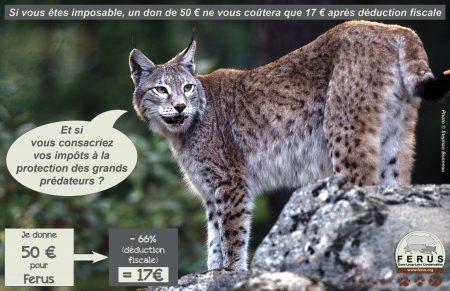 lynx don