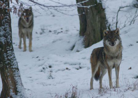 loups morgane vacances scienti