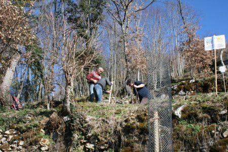 Les arbres sont plantés sur différentes terrasses-matraire (Copier)