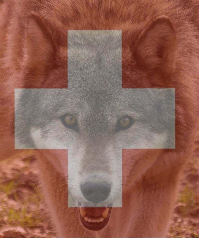loup-suisse-motion-parlement