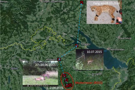 b433 lynx suisse allemagne