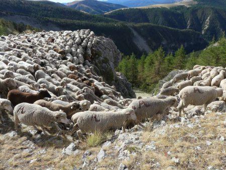 moutons françois magne