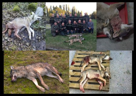 loups-tués-france-100