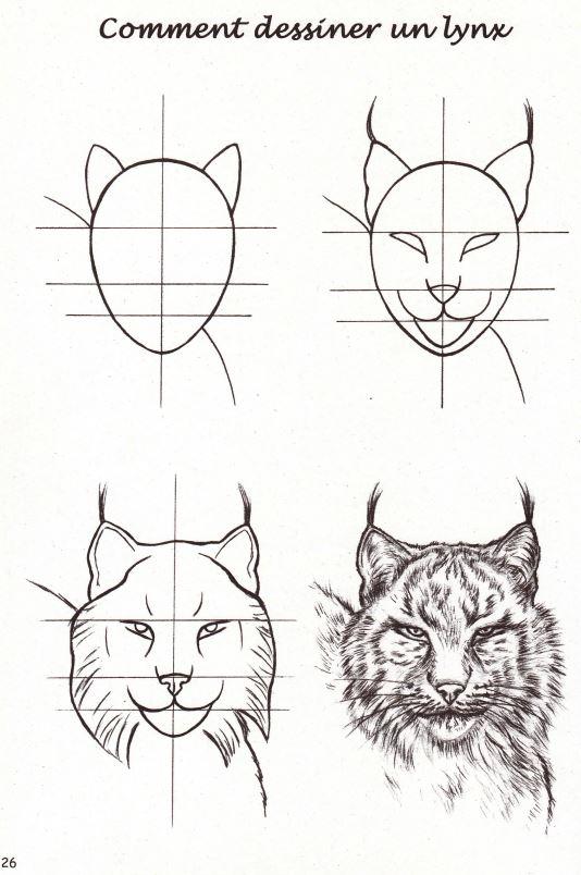 Nouveaute Boutique Cahier Pedagogique Le Lynx Boreal Ferus