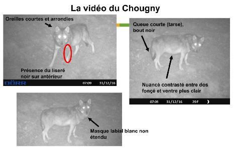 loup chougny nièvre