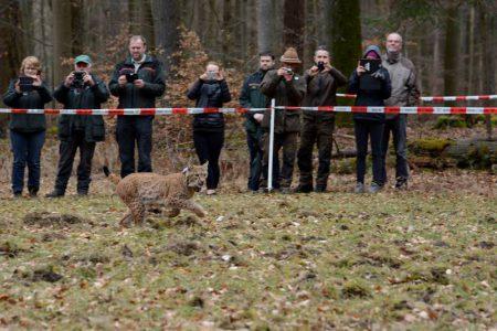 lynx arcos suisse relâcher