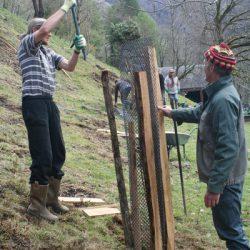 installation des protections contre les herbivores