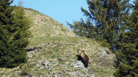 ours eriz canton de berne