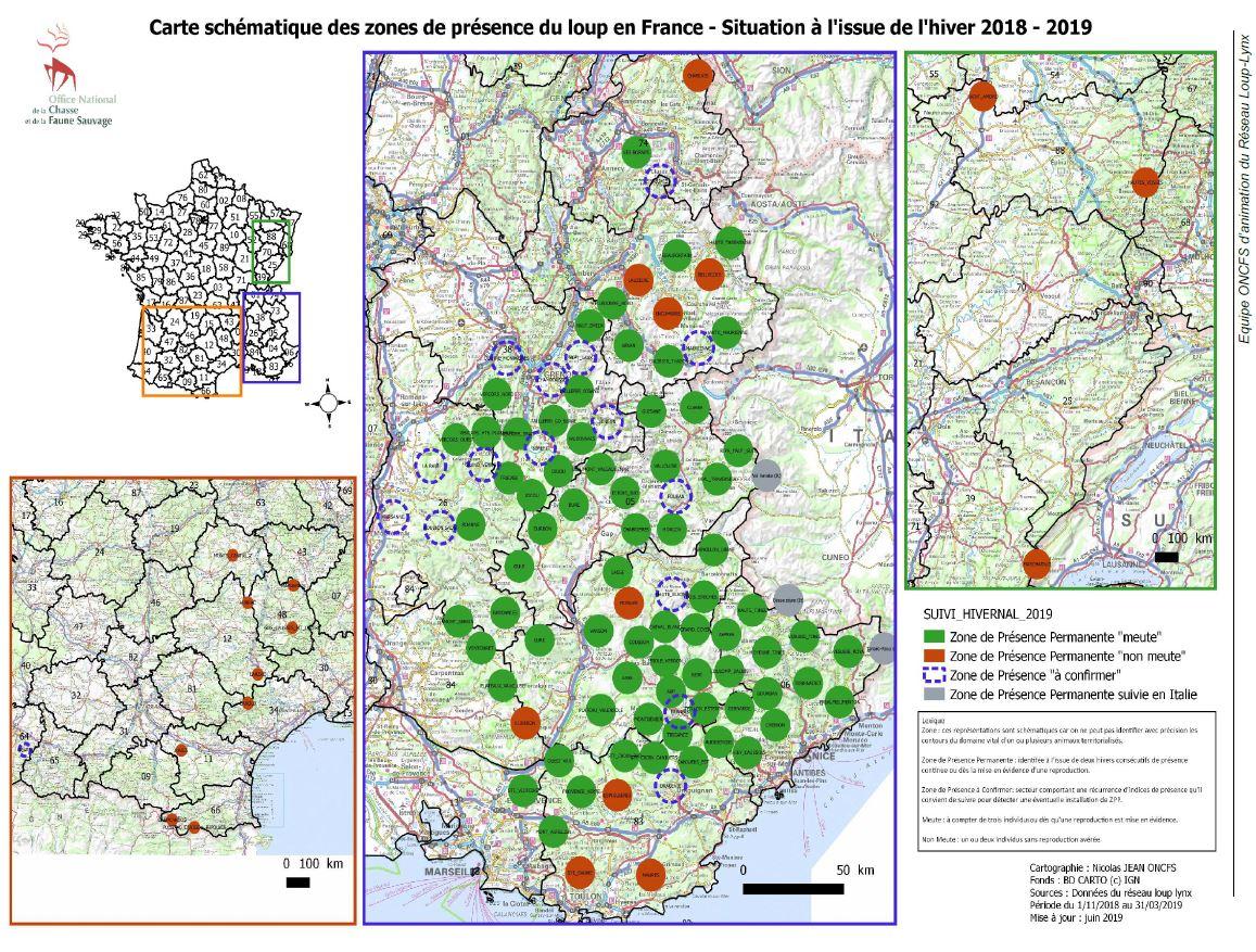 Le loup : biologie et présence en France | FERUS
